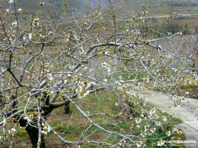 Cerezos en flor; Valle del Jerte; excursiones guadalajara viajes organizados en grupo viajes en grup